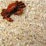 【貝殼】貝殼砂